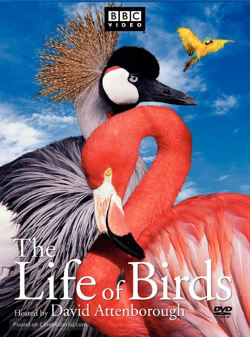 """""""The Life of Birds"""" - Movie Cover"""